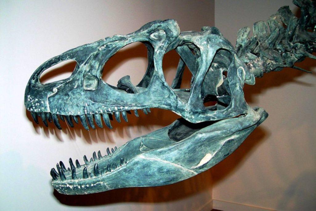 череп аллозавра