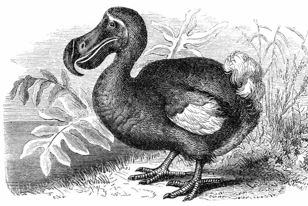 Птица Додо