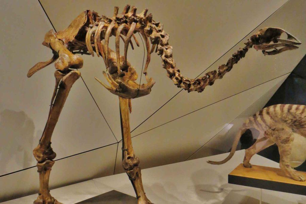 Восточный моа скелет