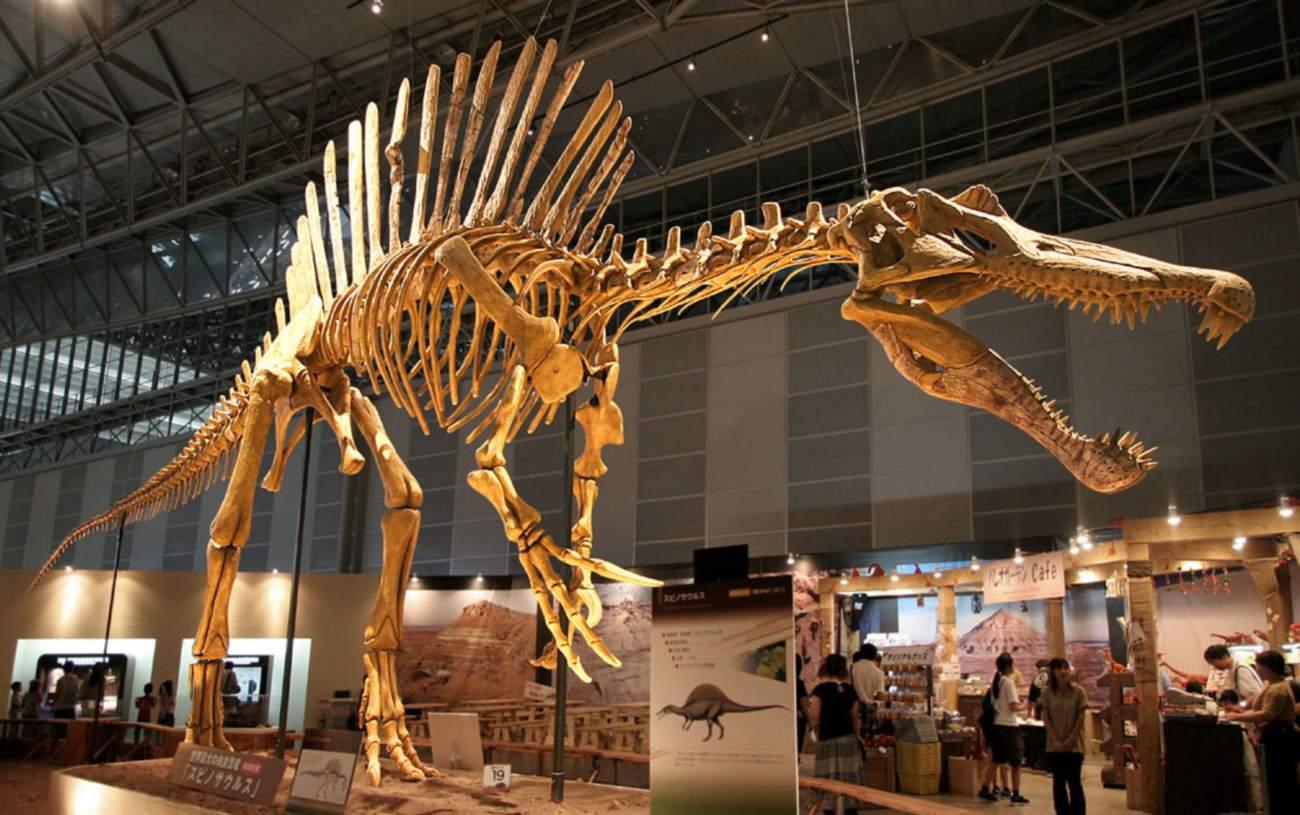 скелет спинозавра
