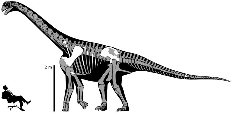 Размеры динозавров