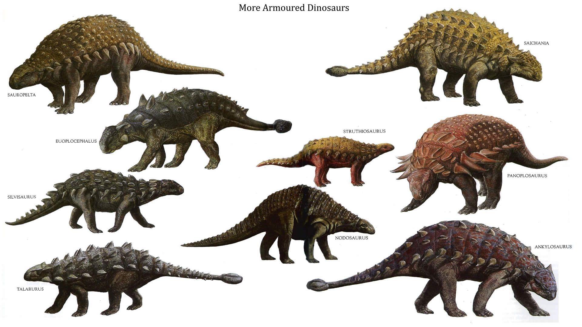 виды анкилозавров