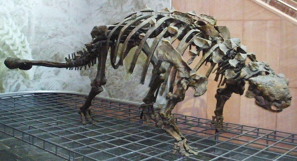 Скелет акилозавра