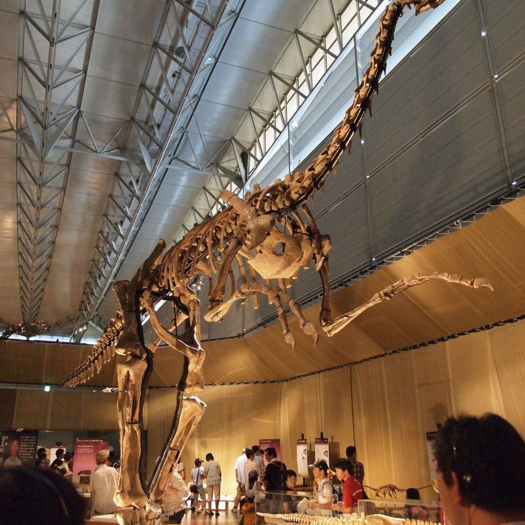 скелет гигантораптора