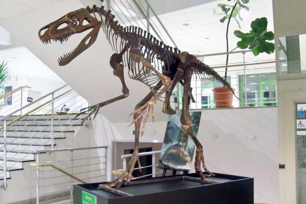 скелет смока