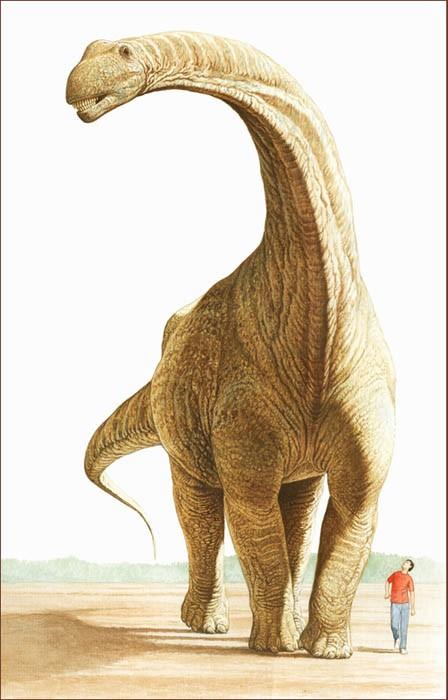размеры аргентинозавра