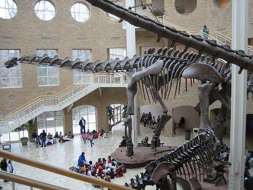 скелет аргентинозавра
