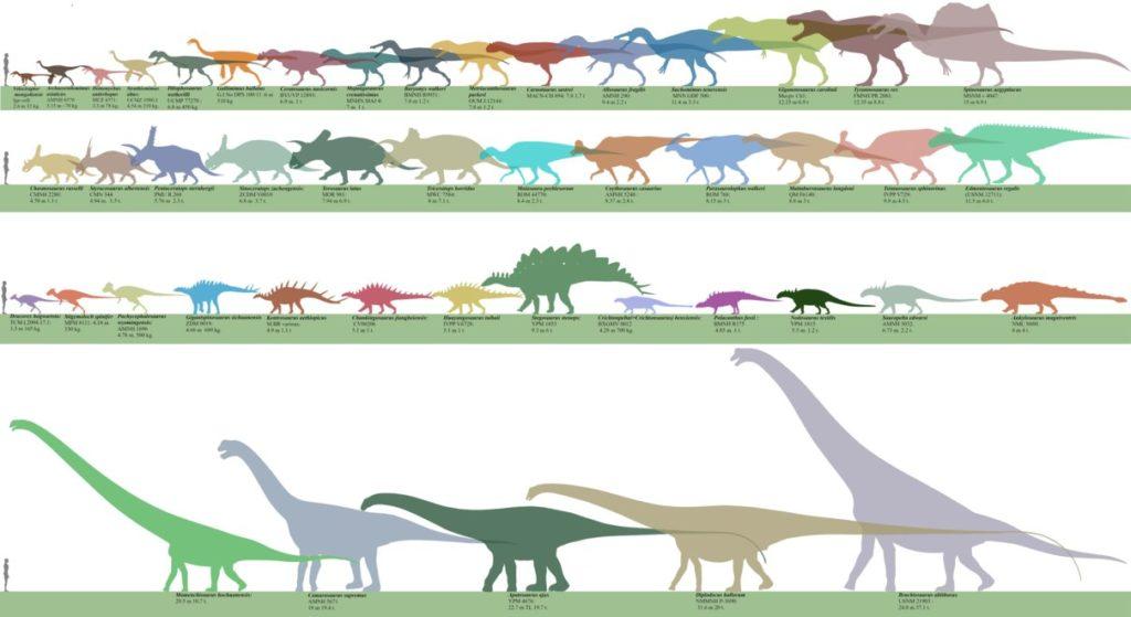 Сравнительные размеры динозавров
