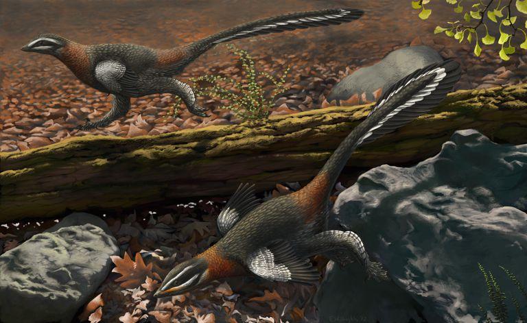 Пернатые динозавры