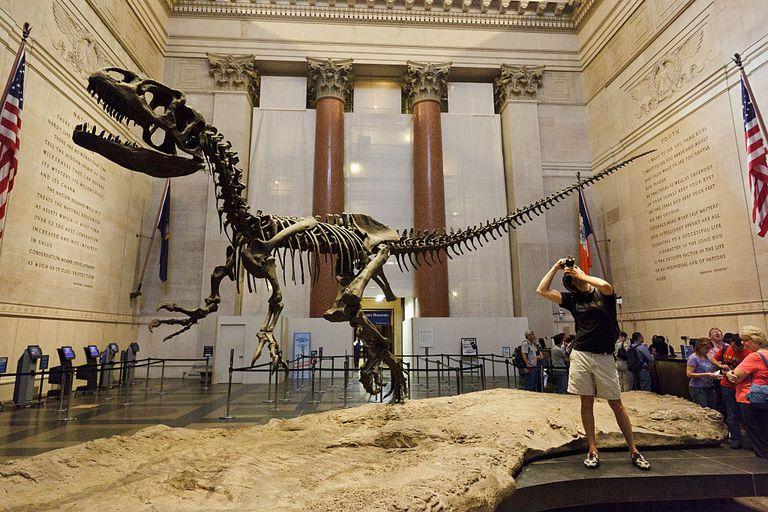 Скелет аллозавра