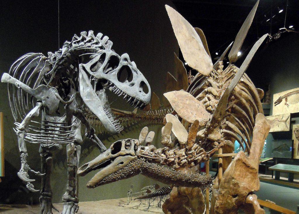 Скелеты аллозавра и стегозавра