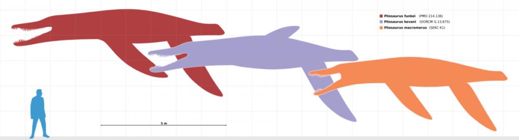 размеры плиозавров