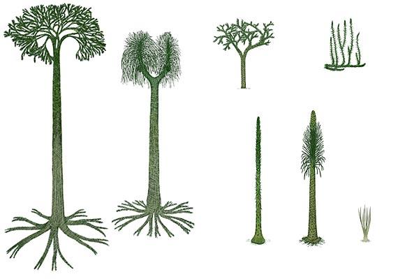 растения девонского периода