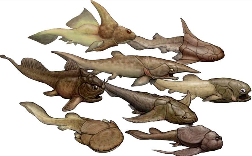 плакидермы (панцирные рыбы)