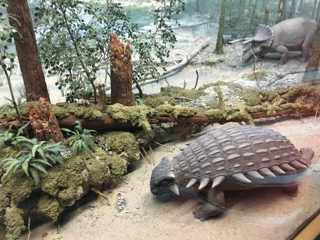 модель анкилозавра в музее
