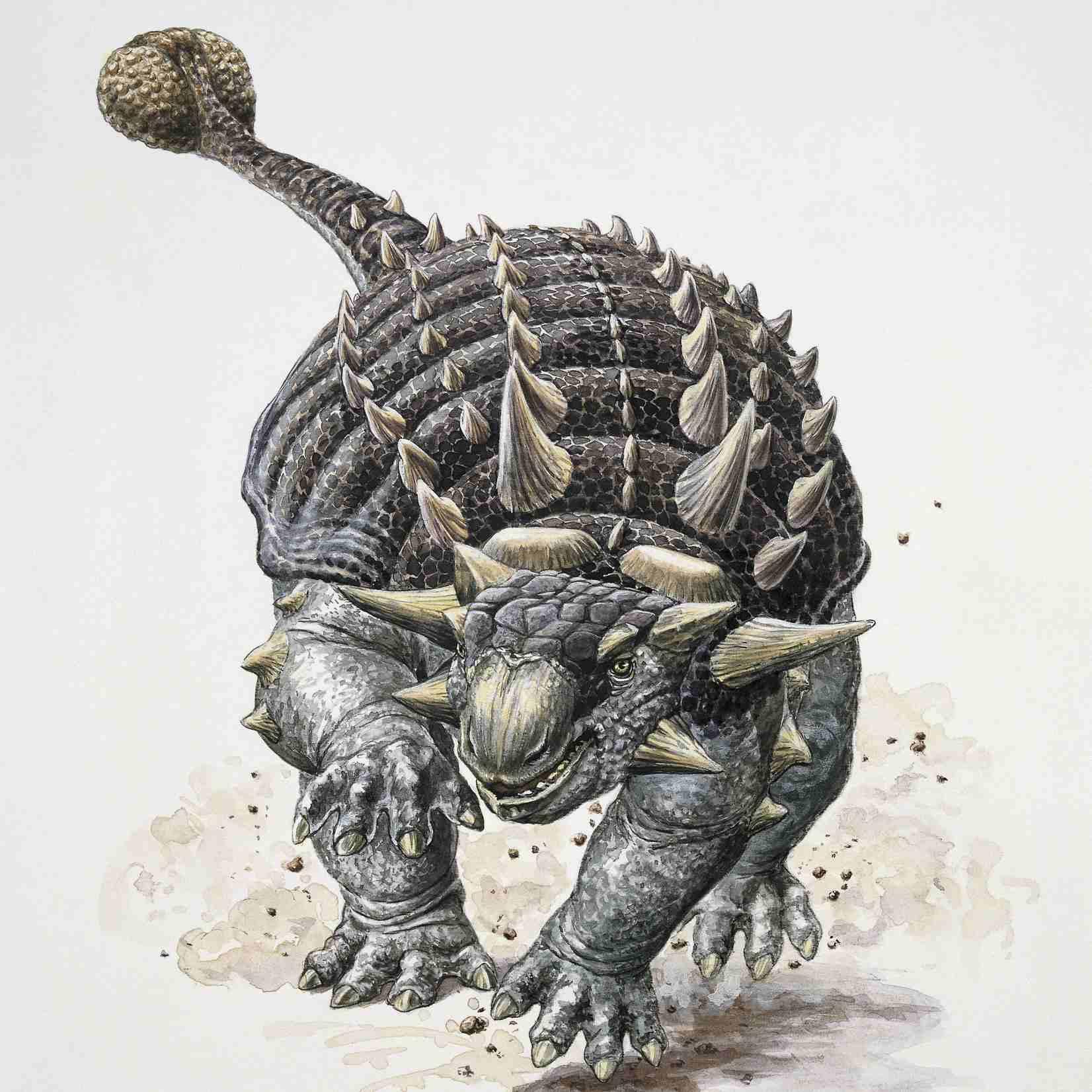 анкилозавр рисунок