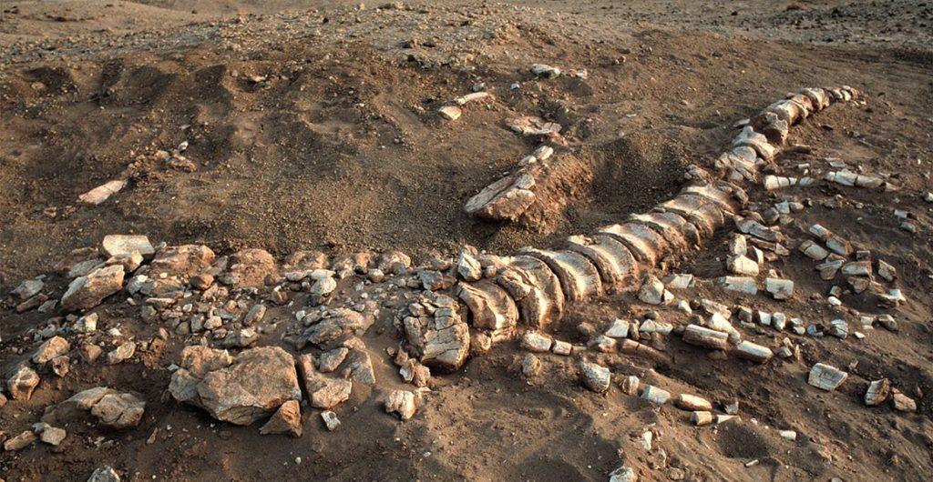 окаменелости динозавра в месте находки