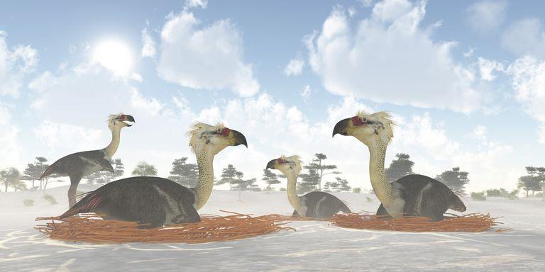 фороракосы на гнездовье