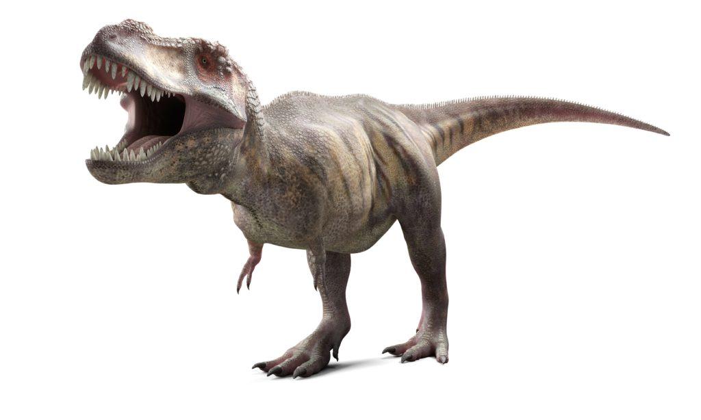 реконструкция тираннозавра