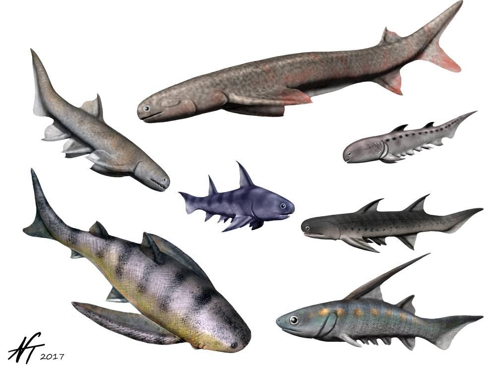 Рыбы семейства аконтодовые