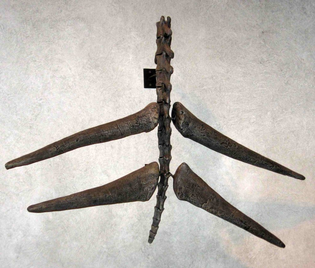 шипы на хвосте стегозавра