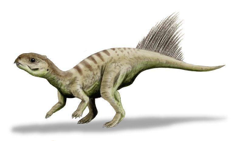 Чаоянгозавр. Предок трицератопса