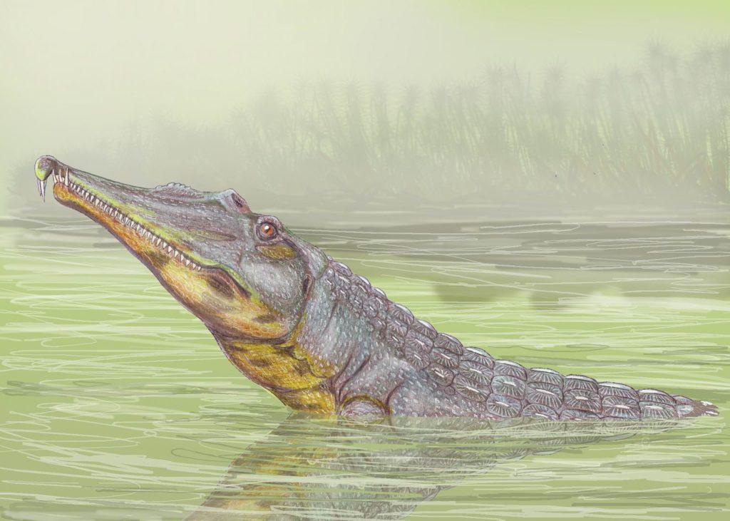 представитель фитозавров rutiodon