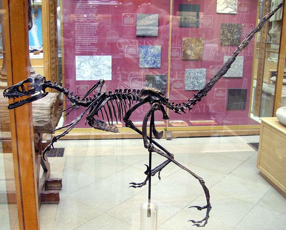 скелет бэмбираптора
