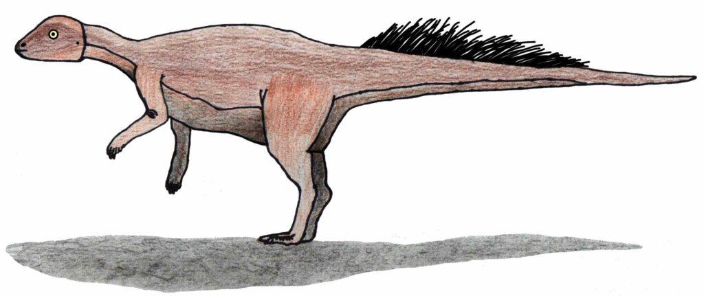 микропахицфалозавр